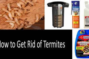 Ways To Kill Termites In Your Residence
