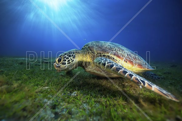 For How Long Do Turtles Live?