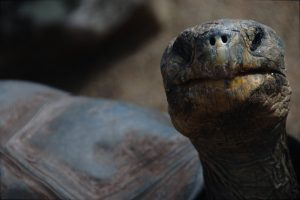 Formulas As Well As Shortcuts For Eastern Box Turtle