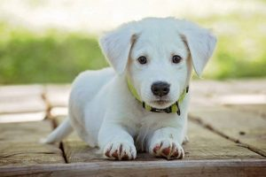 Tips For Individuals With Family pets